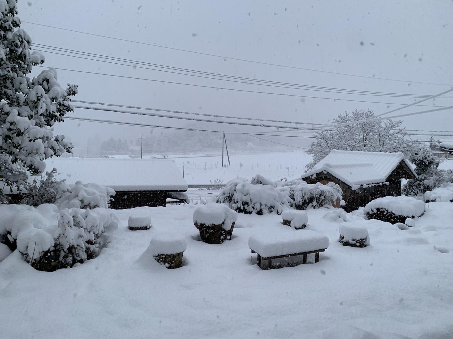 ようやく、雪がしっかり降りました